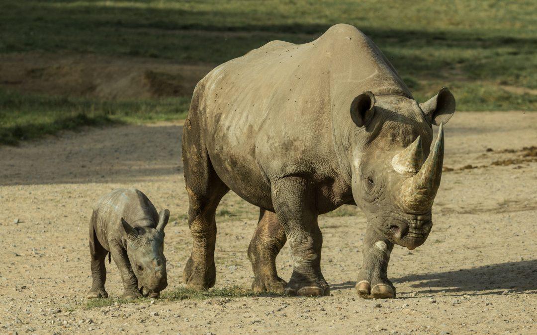 Wildlife SOS – Extinction is Forever